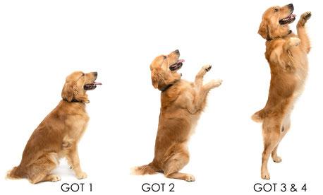GOT-Satz in der Hundeversicherung