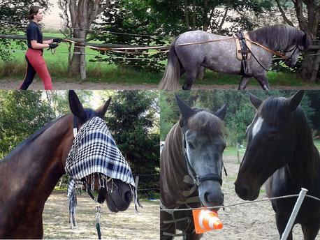 Vertrauenstraining mit Pferden - ein vertrauter Umgang mit dem Pferd