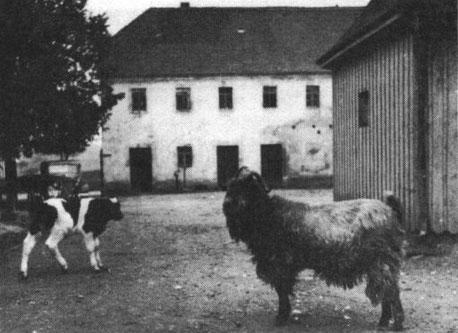 """""""Gustav"""" der Hofwächter in Görna, Foto: Nachlass Benno von Heynitz"""