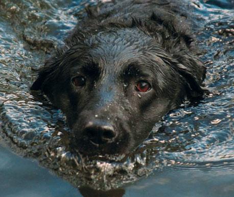 Hundestrand Hund Wasser Schwimmen