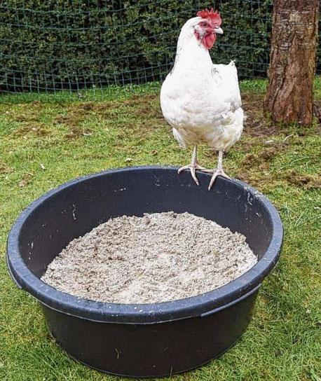 Hühner baden gerne - nur nicht im Wasser
