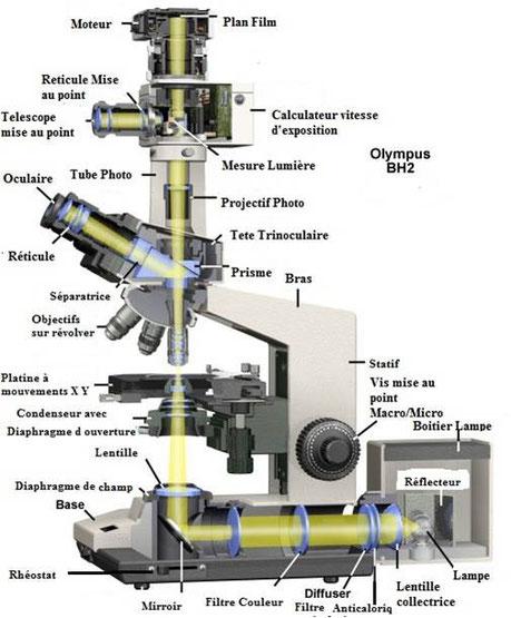Claude Gonon Microscopie : Vue éclatée d'un microscope droit