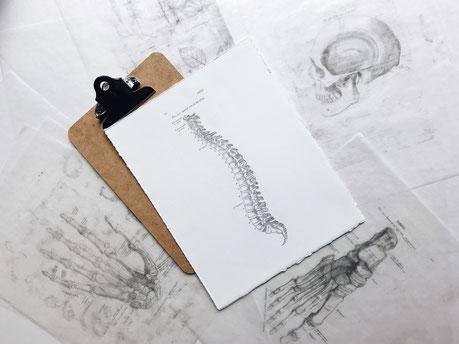 Rücken-Fit Training  - Gesund leben mit SYMBIOFIT