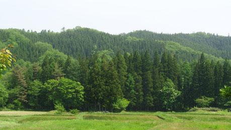 鳴子・中山平温泉で、明日まで開催中!昨日行ってきました。この景色を見ながらのランチタイム〜最高でした!帰りは、しんとろの湯でこれまたマッタリ!!詳細は、里山カフェHPを見てね。
