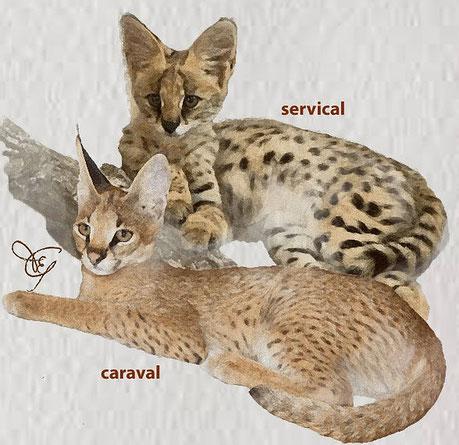 Gatto Servical e Caraval