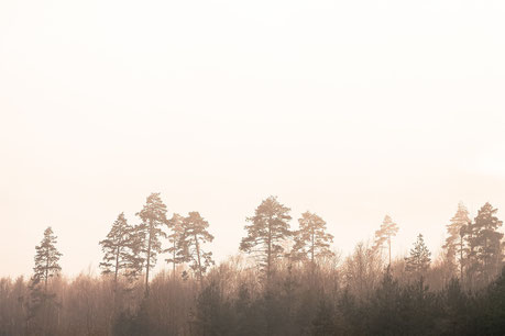 Integrative Erziehungsberatung|Bild Wald