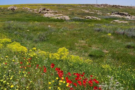 Niche écologique du Moyen Atlas (Tanourdi), ©Frédérique Courtin-Tarrier