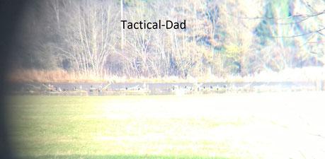 Kormorane tagsüber auf Totholz sitzend mitten auf dem See. Die Aufnahme täuscht etwas, die Vögel sitzen über 100m weit weg vom Ufer.