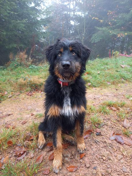 Benno ( Ulix ) 6 Monate