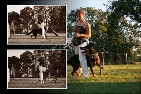 Dog Dancing ludique pour chien