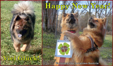 Bia hat ihren 1. Silvester erlebt und war zum Jahreswechsel cool und lustig!