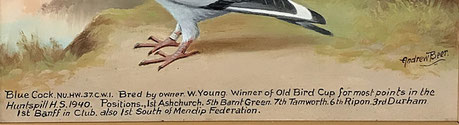 Andrew Beer, a prize winning racing pigeon fok art