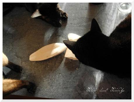 Kurze Zwischennotiz, die Katzen scheinen den Geruch zu lieben.