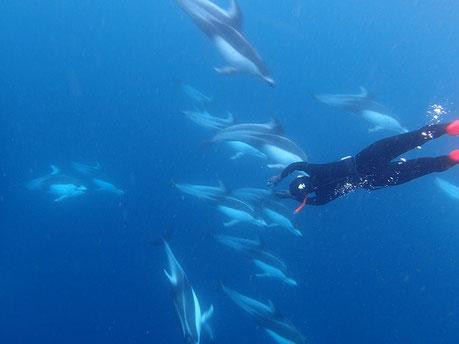 東伊豆ドルフィンスイム:カマイルカと泳ぎドルフィンスイムを楽しむスイマー