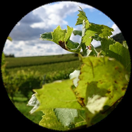 Weinberge Weingut von der Tann Iphofen