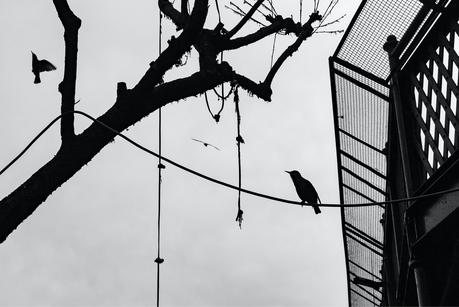 Dettaglio e composizione, foto scattata a Camden Town a Londra