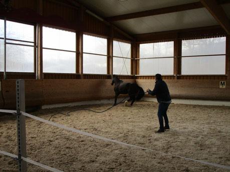 """Als Trainingsteilnehmer verlässt man bewusst die eigene """"Komfort-Zone"""" und stellt sich den spielerisch anmutenden Übungsherausforderung am Pferd."""