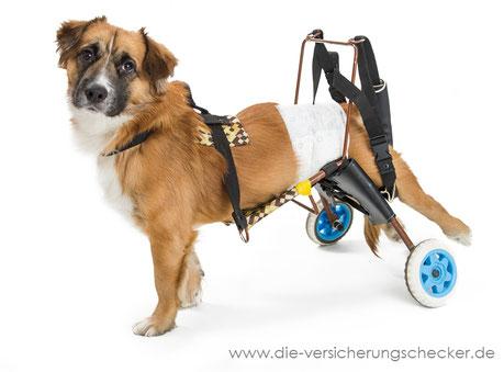 Wenige Ausschlüsse Hundeversicherung
