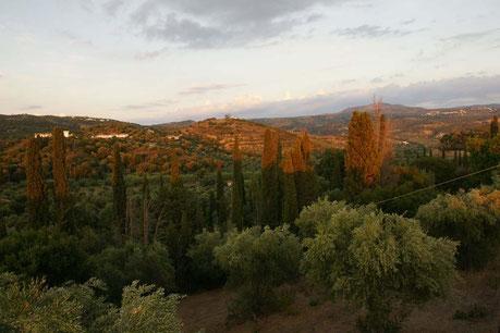 Blick vom oberen Olivenbereich