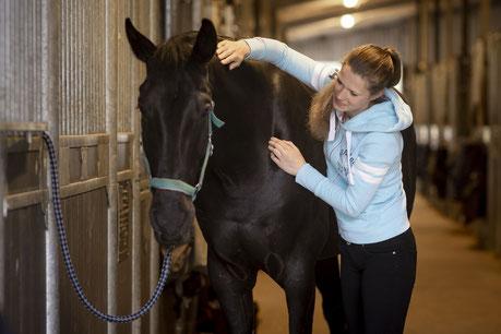 Massage für Pferde und Hunde. Verspannungen. Muskulatur. Durchblutung.