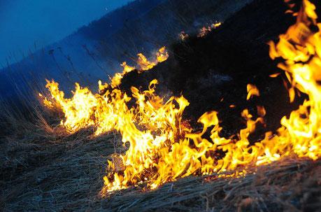 Brennendes Feld
