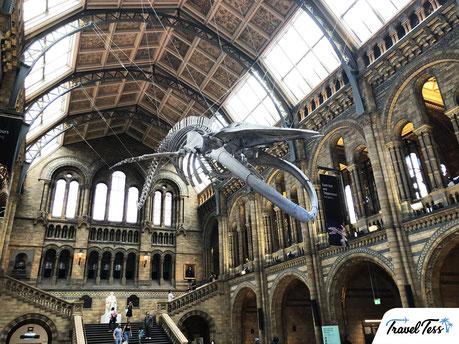 Aankomsthal Natural History Museum Londen