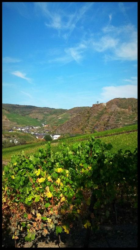 Blick auf Mayschoß und die Burgruine Saffenburg
