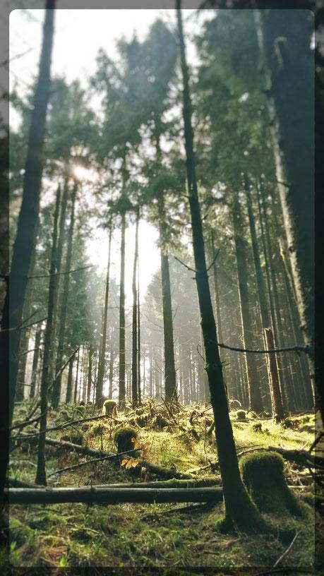 Abstieg vom Dommelturm und Moose wie in Norwegen