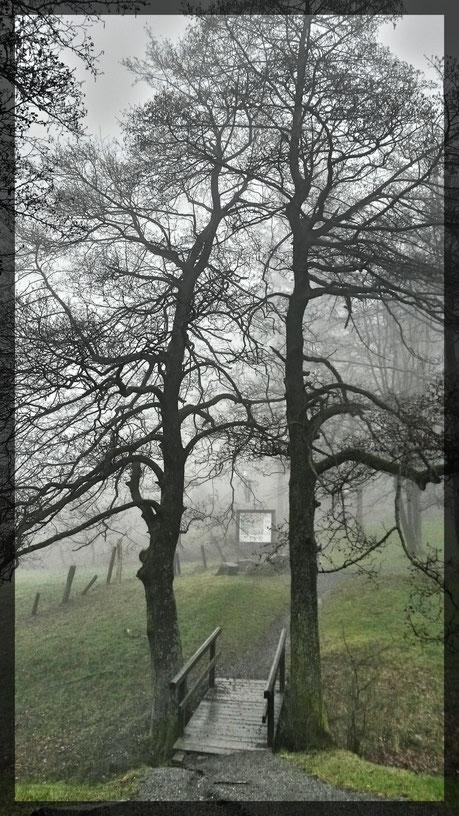 Wanderweg zur Diemelquelle im mystischen Nebel