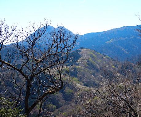 間ノ山山頂より桜の街道と矢筈山
