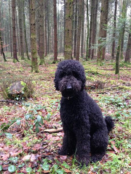 Der Nicht-Jäger im Wald