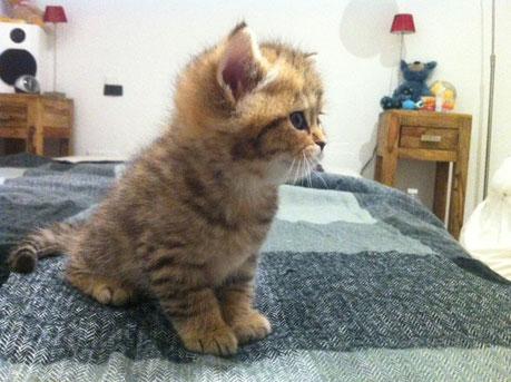 D' Artagnan im Alter von 6 Wochen