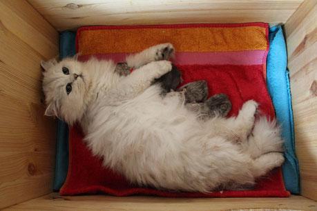 Belle Amy mit ihren Kitten am ersten Tag (Foto: 4.6.2017)