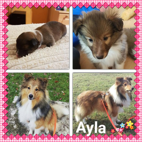 Ayla unsere Fünfte und Letztgeborene🐕🎉🎀  21:51 Uhr  211g🍀