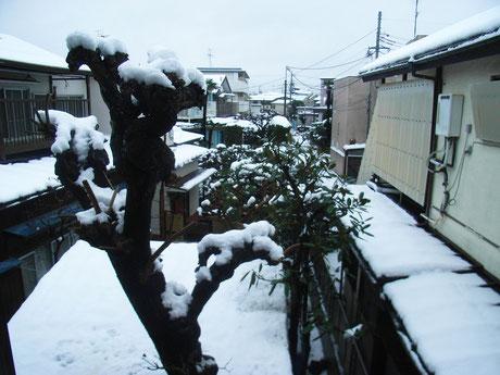 窓からの雪景色です~。