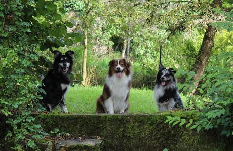 Tagesbetreuung für Hunde