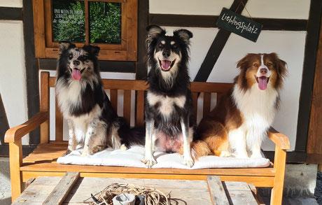 Ferienbetreuung Schaffhausen Hund