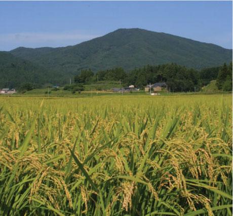 写真:小野町の田んぼの様子