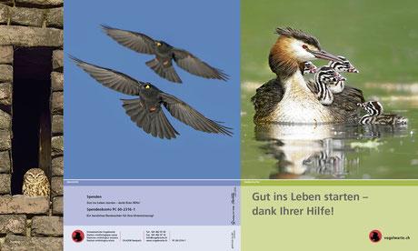 Flyer für einen Spendenaufruf der Schweizerischen Vogelwarte