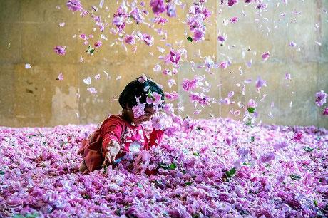 Rosa damascena by Hossein Khosravi  from the Tasnim News Agency website LCC 4.0