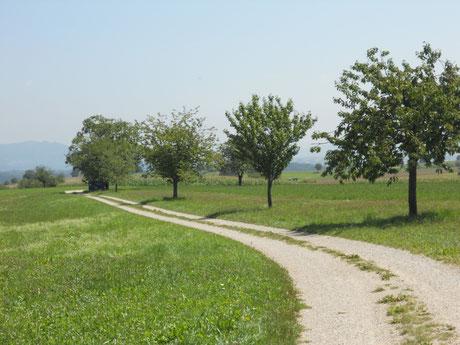 Obstbäume säumen den Weg