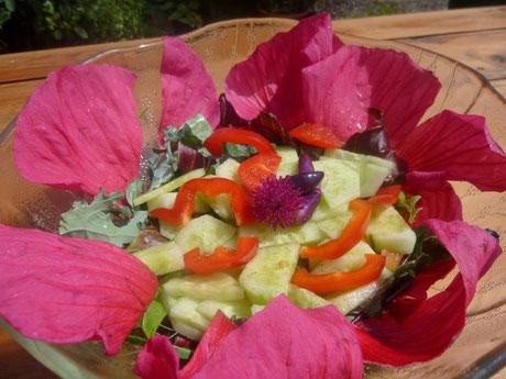 Hibiskus ist in der Volksheilkunde bekannt. Vielseitig ist diese Pflanzengattung. Ob als Gartenschönheit, Bienen und Schmetterlings-Pflanze, als durstlöschend oder im Salat mit Stoffwechsel anregender Wirkung verschönert der Stauden-Hibiskus unseren Tag.