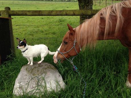 hund, pferd, natur, schweiz