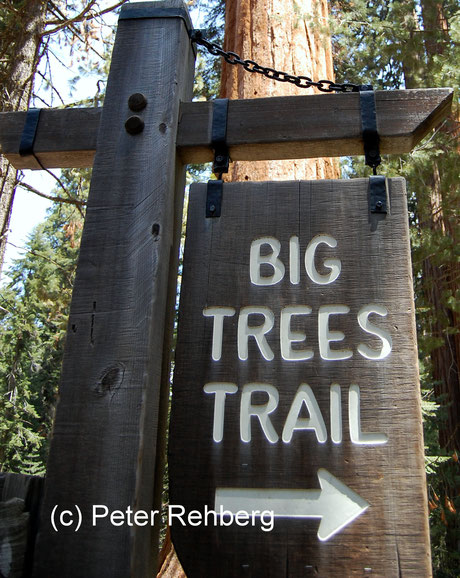Big Tree Trail, Peter Rehberg