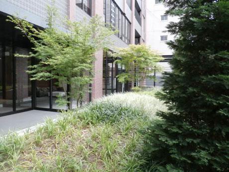 エントランスアプローチ横の公開空地