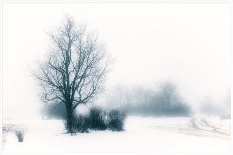 Bosque, nieve, snow, wood, forest, Cuenca, España, Spain, niebla, fog, invierno, winter, árbol seco