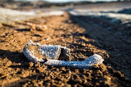 frozen, shoe, frozen shoe, zapatilla, invierno, hielo, escarcha, frost, suelo, ground, tierra, invierno, winter