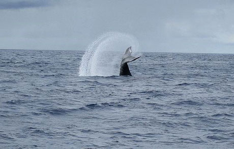 rincon, puerto rico, whale watching