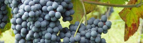 tradizioni contadine e vino a Romagnano Sesia
