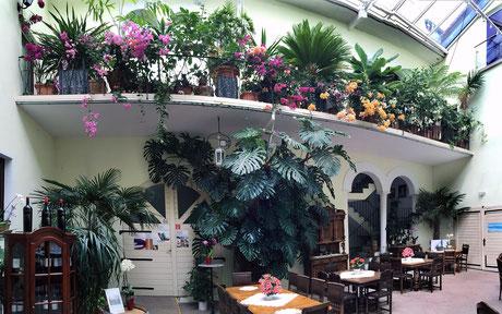 Atrium Weingut Werner Pfleger Herxheim, Bananenblüte